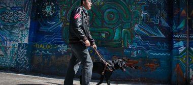 Perros de amor y luz