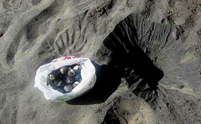 Profepa rescata 120 huevos de tortuga en Colima