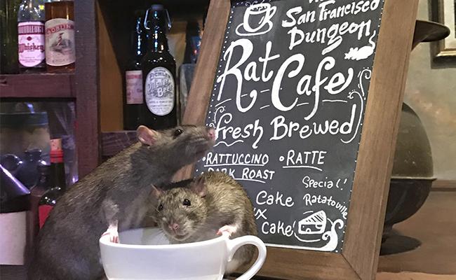 The Rat Cafe, un restaurante donde puedes comer a lado de ratas vivas