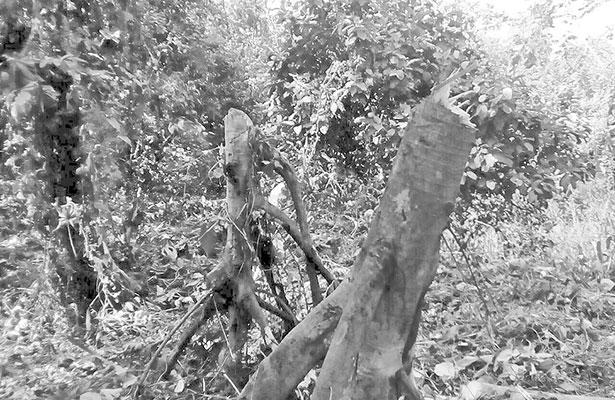"Presuntos ""maras"" invaden Tapachula"