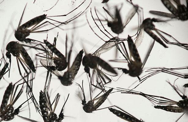 Confirman primer caso de microcefalia asociado con Zika, en México