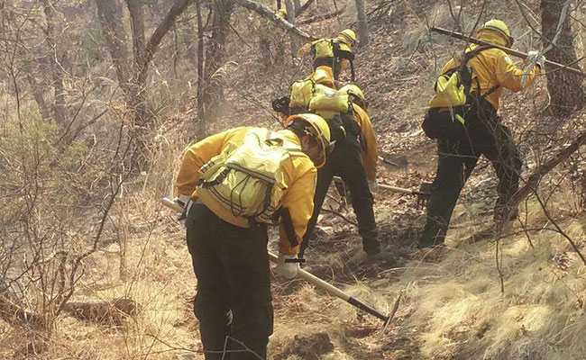 Cinco incendios forestales azotan Sonora