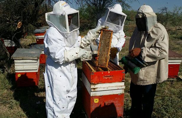 Entregarán recursos para repoblación de colmenas