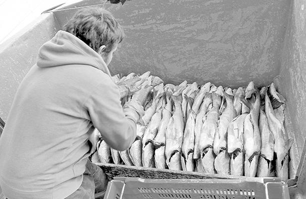 Brexit hundirá al sector pesquero de  la Unión Europea