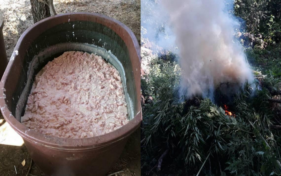 Revientan narco laboratorio en Baja California y 10 plantíos de marihuana en Jalisco