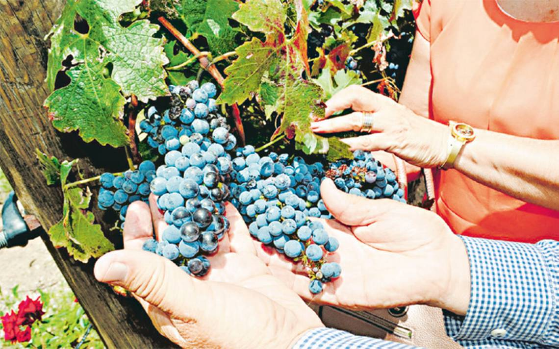 """Premian en China a etiqueta mexicana de vinos """"Hacienda de Encinillas"""""""