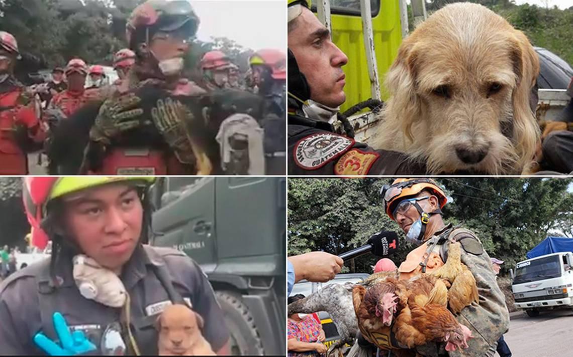 [Video] Amor peludo: así rescatan a animales en zona devastada por el Volcán de Fuego