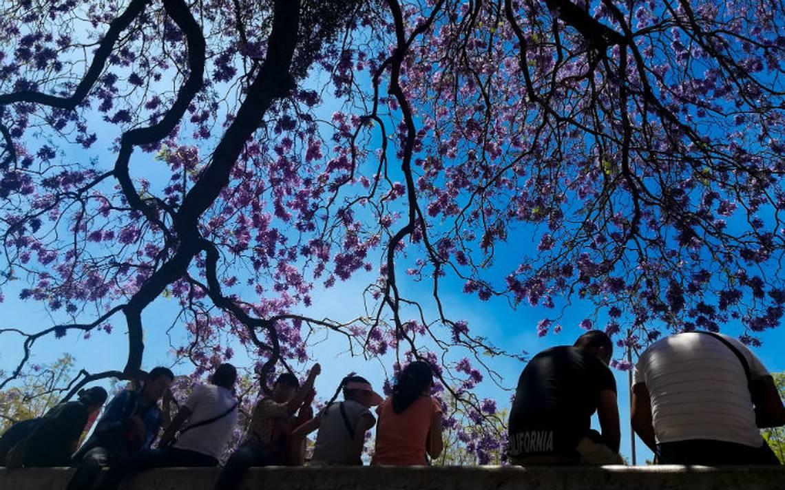 Conoce los beneficios que brindan los árboles en la Ciudad de México
