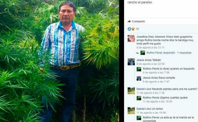 Al estilo del Chapo, regidor de Puebla se toma fotoen plantío de marihuana