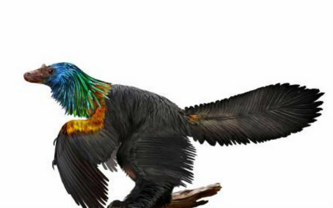 """Dinosaurio arcoíris"" descubierto en China tenía plumas iridiscentes como los colibríes"
