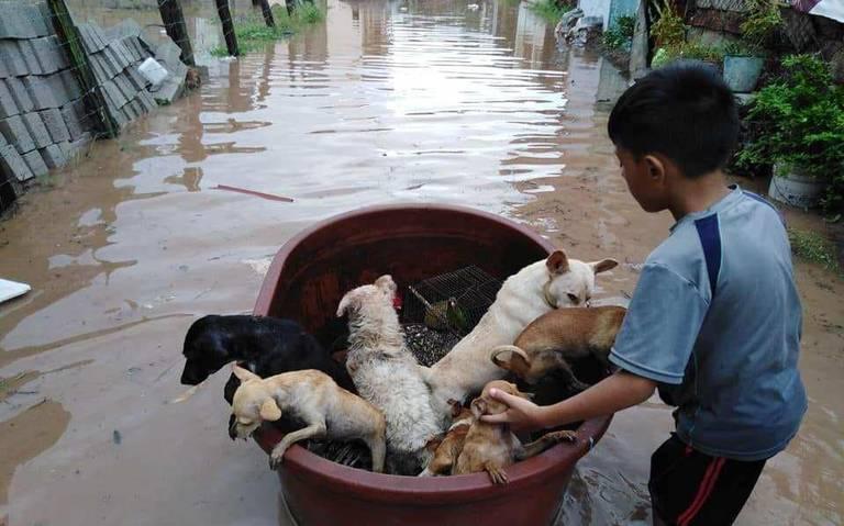 """Al estilo de Noé, niño crea """"arca"""" para salvar a sus mascotas de la inundación en Nayarit"""
