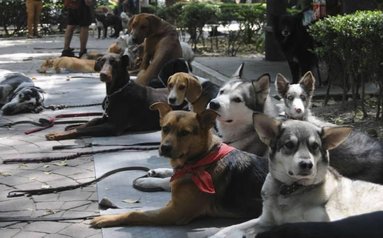 Corte valida IVA a alimento para mascotas