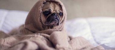 Bañar a tu perrito en diciembre puede ser fatal para su salud