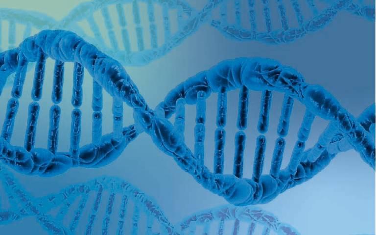 Estudio revela que ADN podría predecir esperanza de vida de las personas