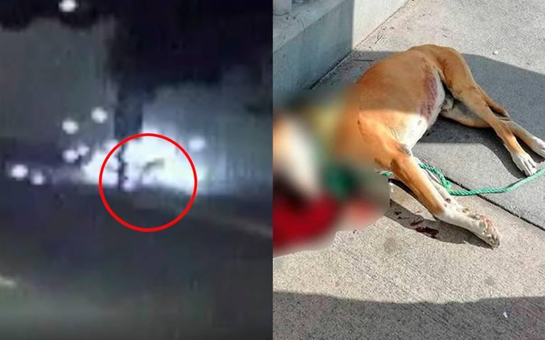 [Video] Así murió Miguel, el perrito que le explotó un cohete en su hocico