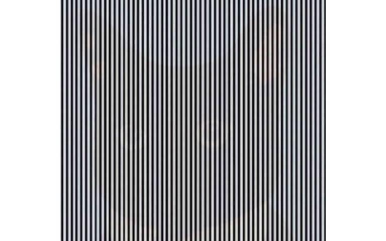 [Video] ¿Puedes ver al gato? Esta es la ilusión óptica que causa furor en redes sociales