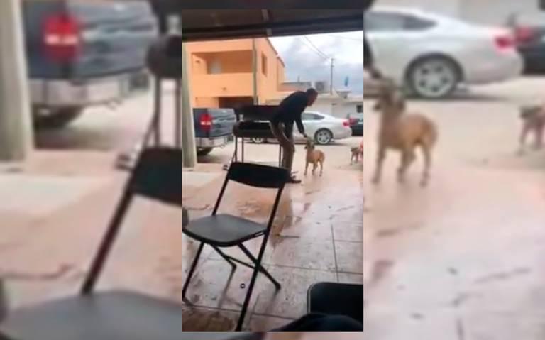 Sí se murió: Entre risas y alcohol, hombre apuñala a perro en Coahuila