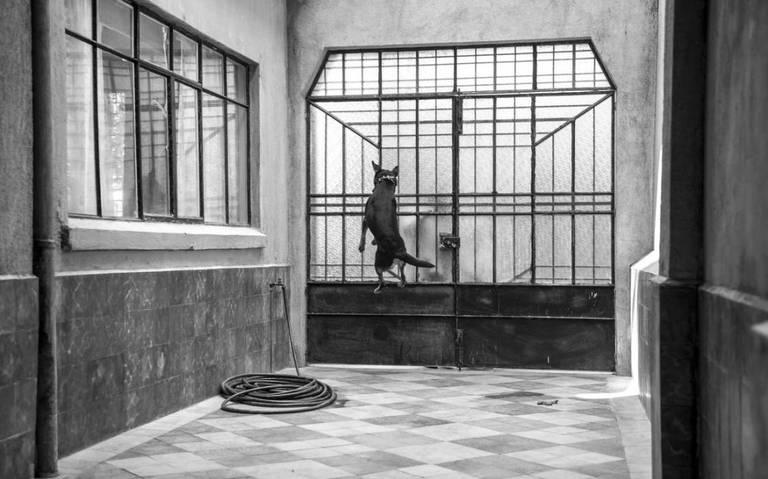 Detrás del saltarín Borras de Roma hay una historia de maltrato animal
