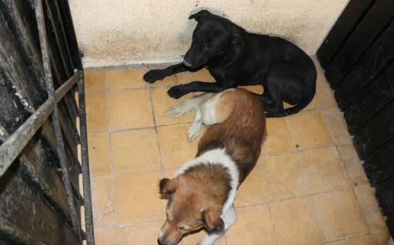 Entregan a albergue a jauría de perros que atacó y mató a mujer en Tecámac