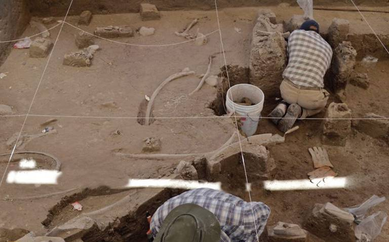 Hallan restos de mamut en Tultepec, Edomex