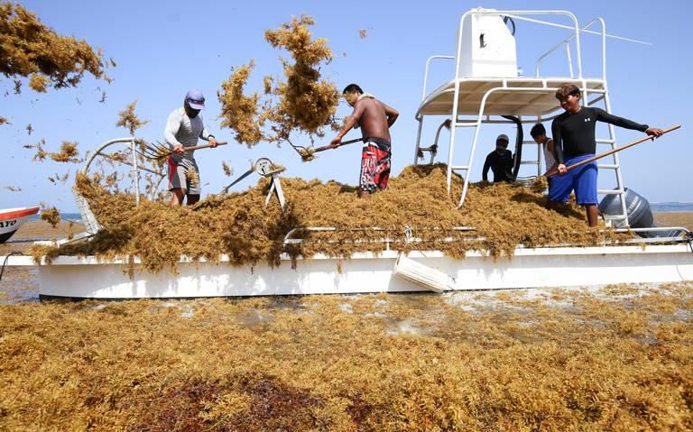 Sargazo, uno de los mayores retos que enfrenta el país por el cambio climático