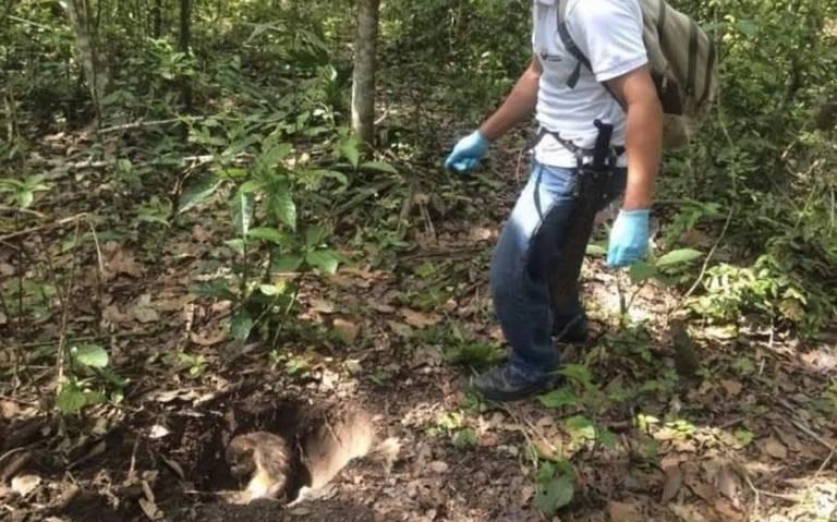 Mueren monos aulladores por intensa sequía