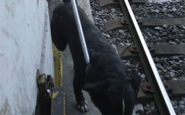 Detienen marcha por un perro en vías del Metro entre Tepalcates y Guelatao