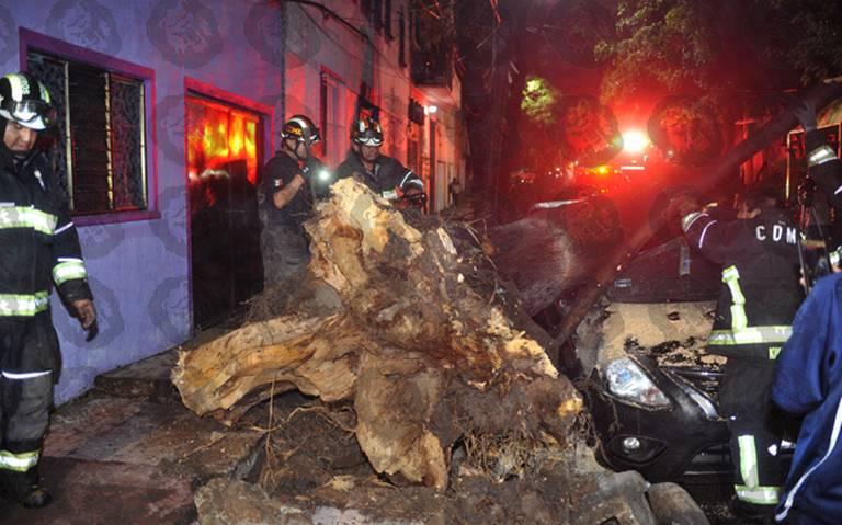 Cae árbol y aplastó a automóvil en la Anáhuac