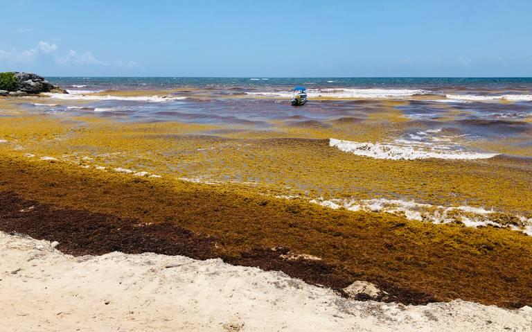 Sargazo aleja al turismo en Playa del Carmen