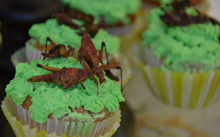 Brownies de chapulines ya son posibles con harina de este insecto