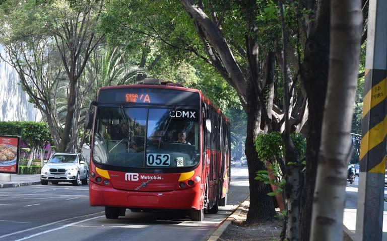 En riesgo 34 árboles por obra en Línea 1 del Metrobús