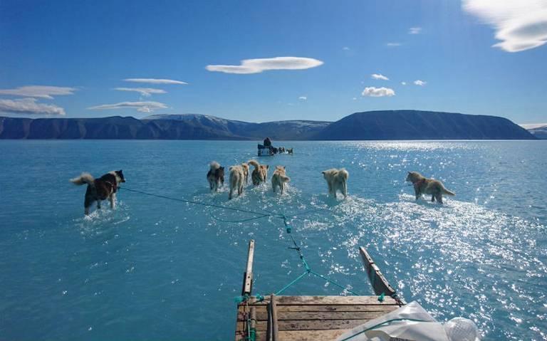 ¿Perros caminando sobre agua? La imagen que evidencia el deshielo en Groenlandia