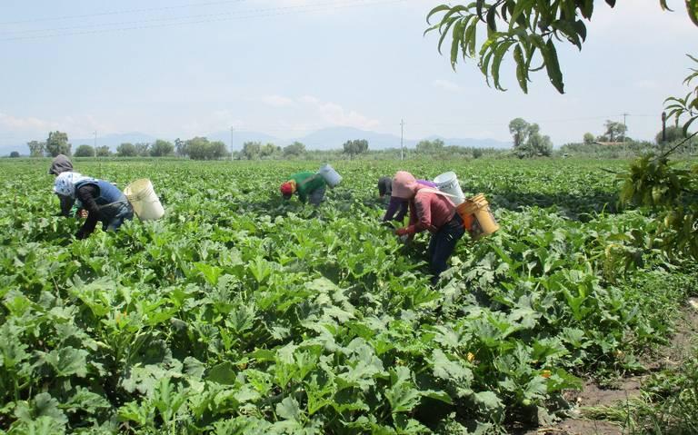 Cultivan maíz y frijol con aguas negras en Valle del Mezquital