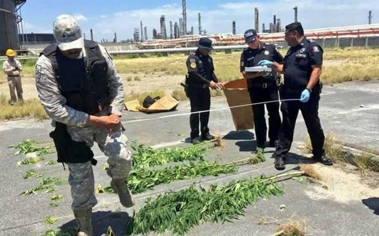 Encuentran plantío de marihuana en refinería de Cadereyta, Nuevo León