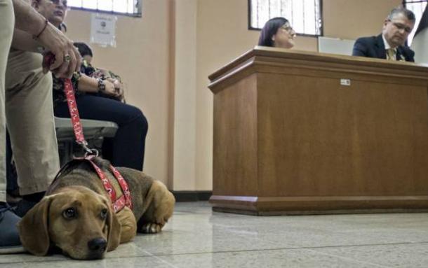 Perrito pierde juicio contra su exdueña acusada de maltrato