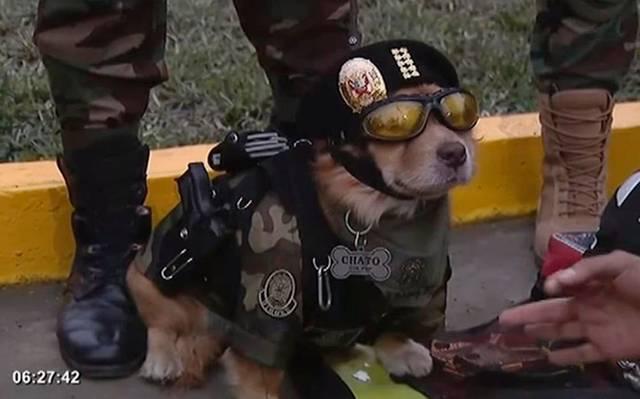 Chato no se anda con pelotitas, así luce su pistola este perrito policía