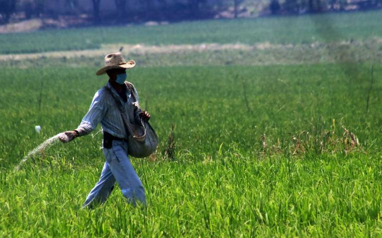 Reporta AMLO avance en entrega de fertilizantes en Guerrero