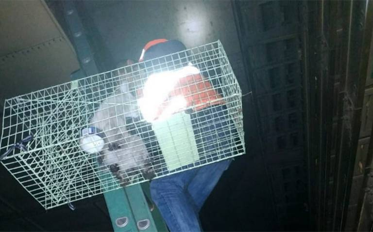 [Video] Personal del Metro rescata a gatito en la Línea 3