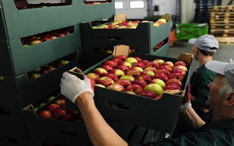 Gobierno busca reducir en 80% la compra de alimentos al extranjero