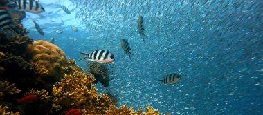 ¡En peligro de extinción un tercio de los peces en aguas mexicanas!