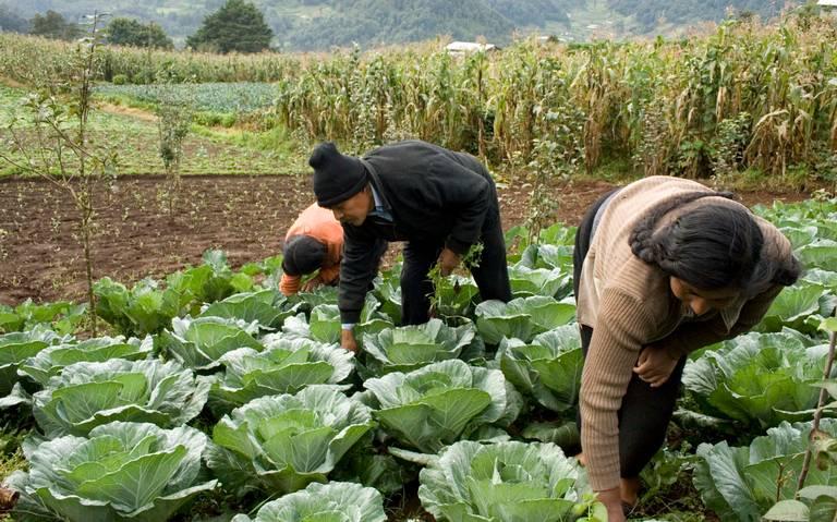 SLP, referente en justicia para jornaleros agrícolas
