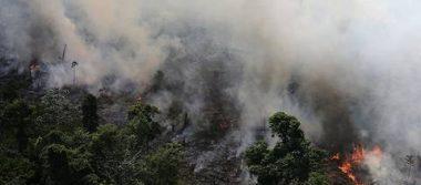 ¿Quieres ayudar al Amazonas? Aquí te decimos cómo hacerlo desde tu casa