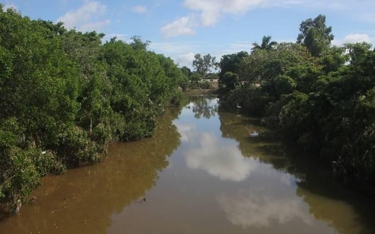 Tala de mangle en el arroyo Jabalines es sin autorización, asegura Profepa