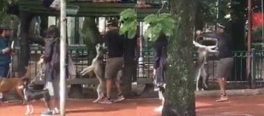 Detienen a hombre que asfixió a un husky en el Parque España