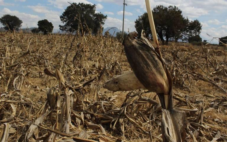 Padecen 23 municipios de Puebla sequía severa