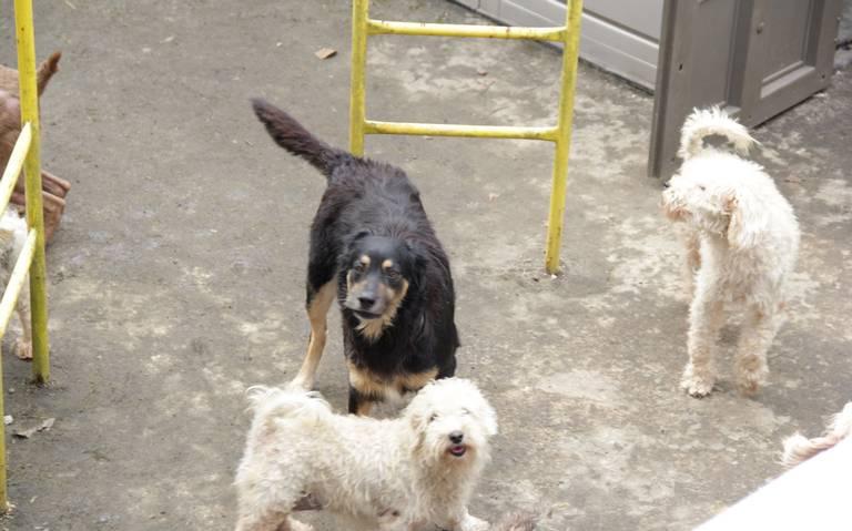 Sin control, proliferación de perros en calles de Xalapa