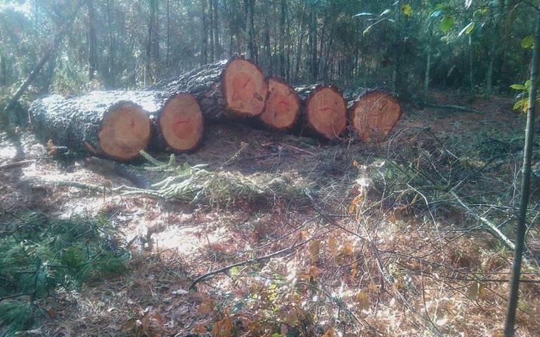 Hasta en los bosques, crimen organizado controla también tala ilegal en Puebla