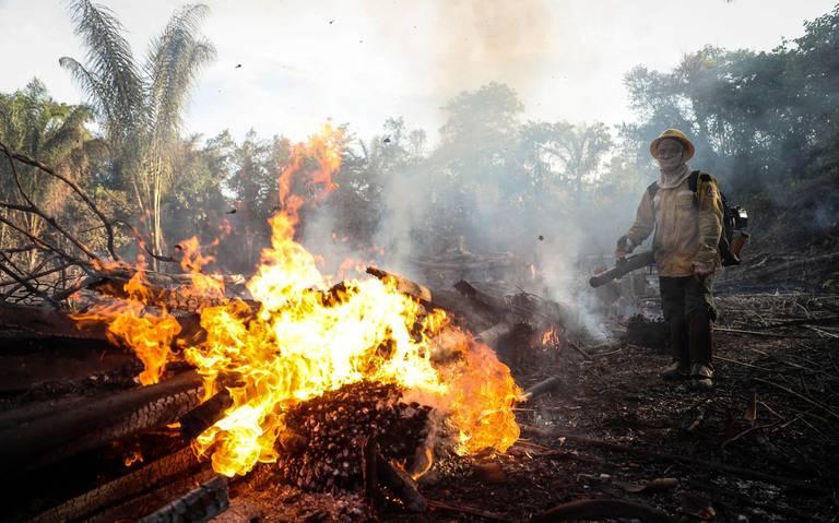 En menos de un año, deforestación se duplica en el Amazonas
