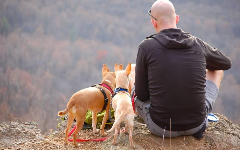 Tips infalibles para ir de camping con tu perro