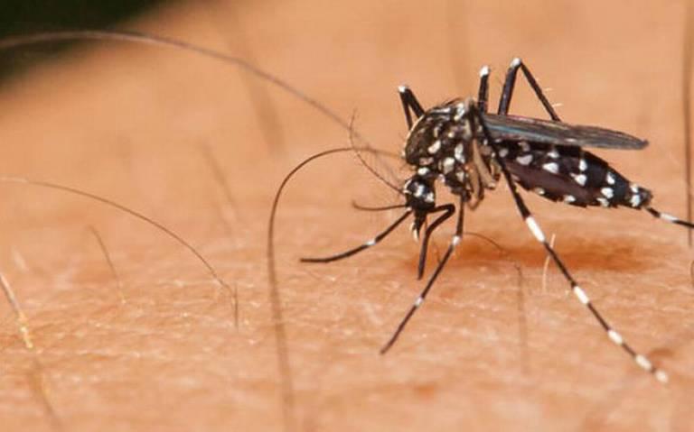 Analizarán expertos declarar alerta por dengue